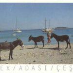 esek-adasi-kartpostal
